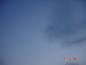 DSC08375-T.jpg